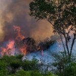 incendio en la amazonas